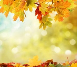 fall-background